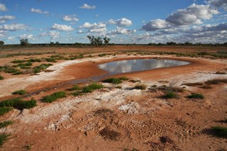 Artesian Springs, Currawinya National Park