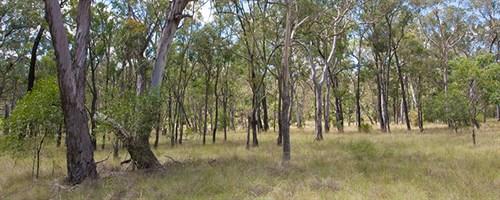 vegetation reforms