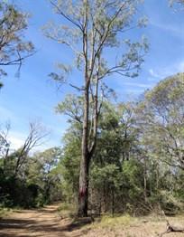 habitat-tree